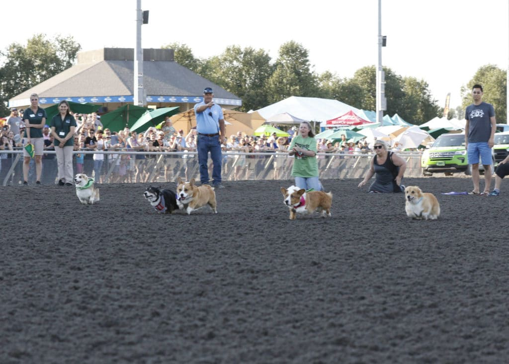 2018 Corgi Races Emerald Downs