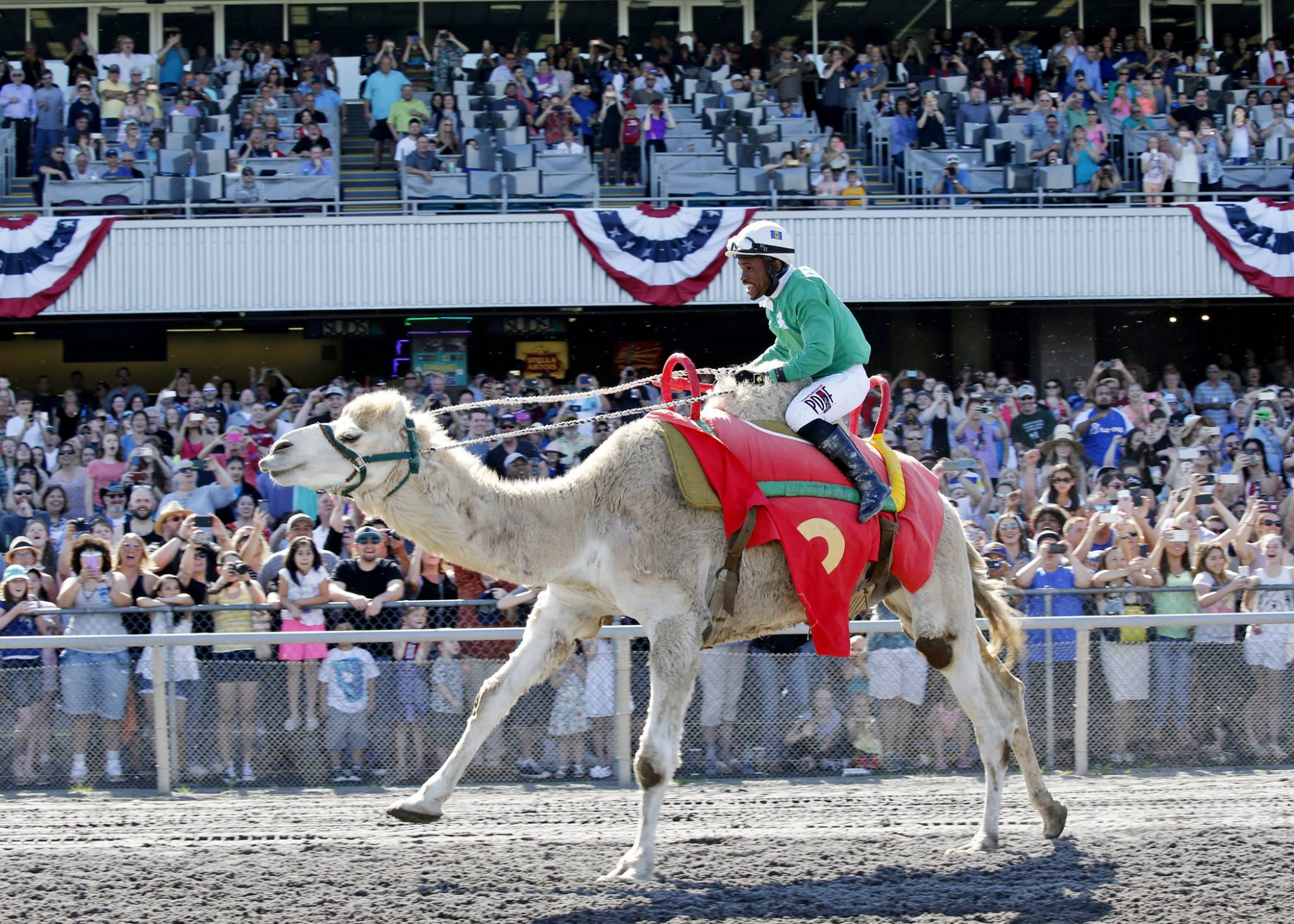 ostrich camel amp zebra racing 50k seattle stakes